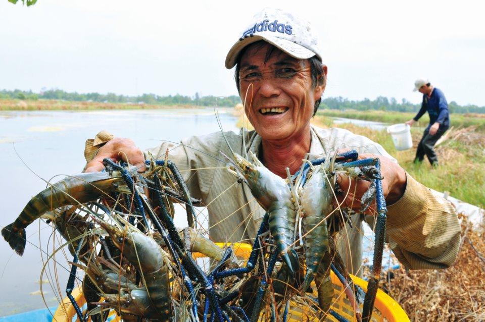 Bán sỉ Test Sera Kiên Giang - Nuôi tôm càng xanh ở Kiên Giang