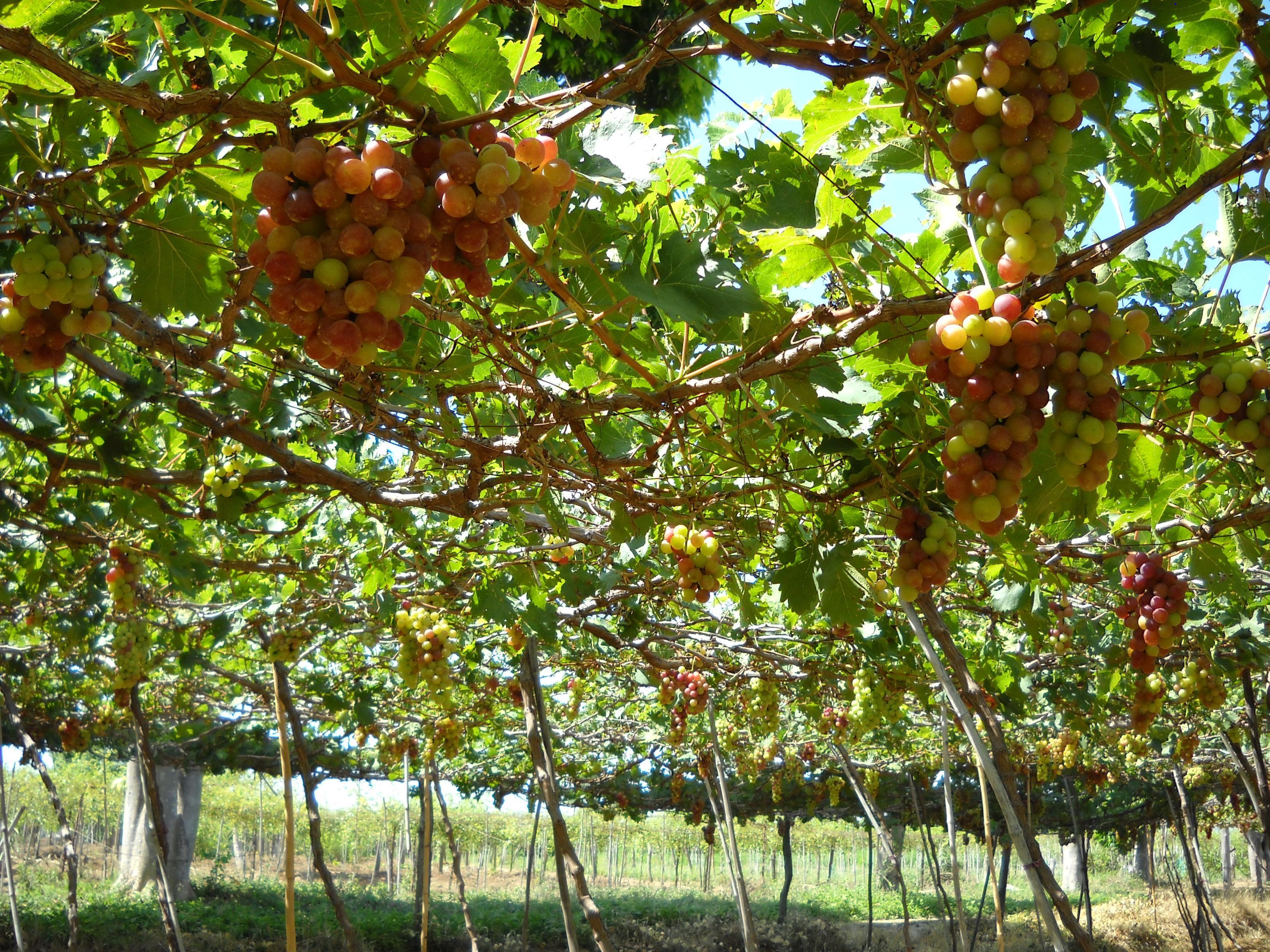 Test Sera Ninh Thuận và nghề nuôi tôm giống